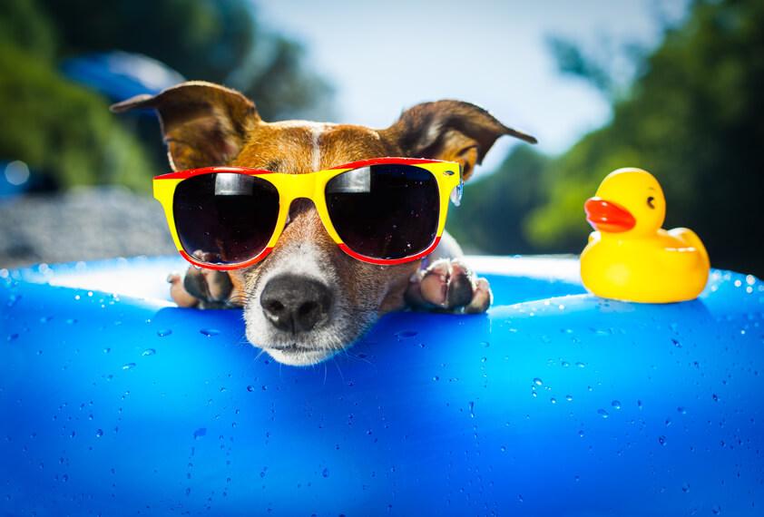 Hund auf Luftmatratze/ Wassermatratze